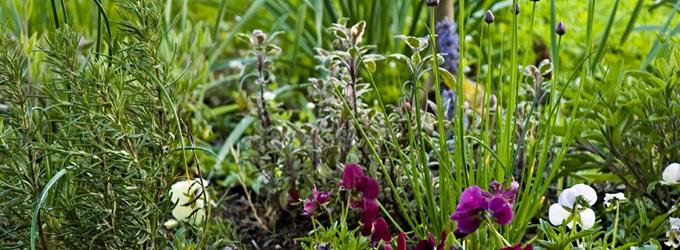 травы от неприятного запаха изо рта